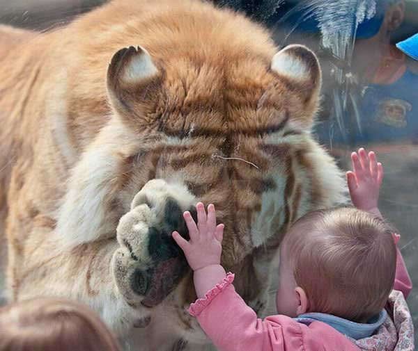 http://detskiy-mir.net/images/fotoprikols/6958_big.jpg