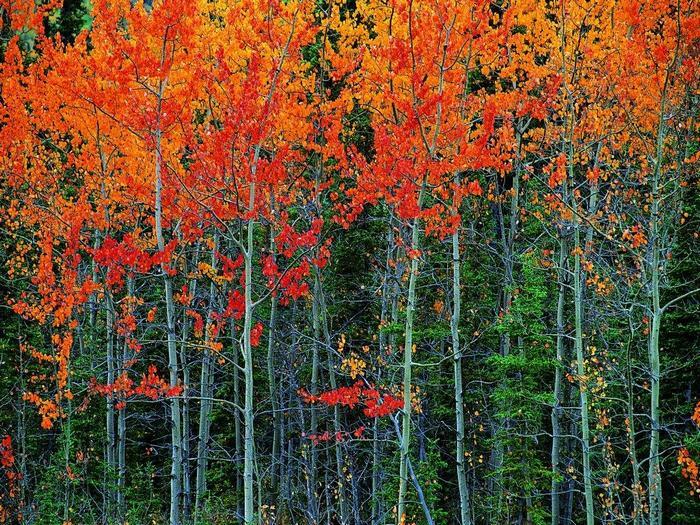 В багрец и в золото одетые леса...