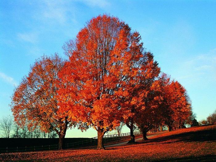В красных листьях бережок, каждый листик - как флажок...